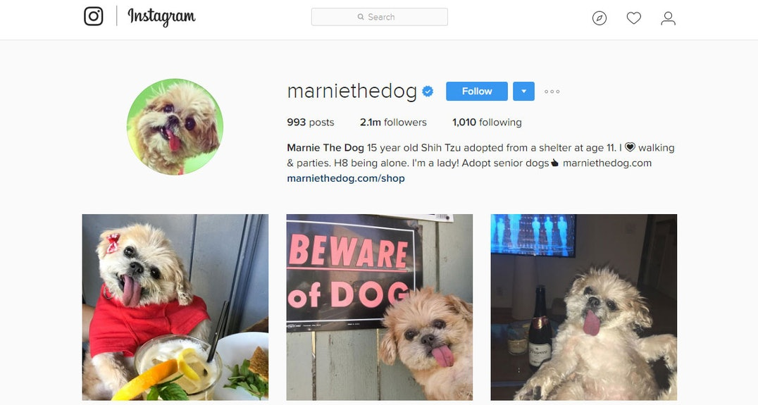 Instagrammer of the Week | Dogs on Instagram | The Good Web